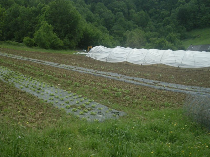 Des-semis-en-pleine-terre